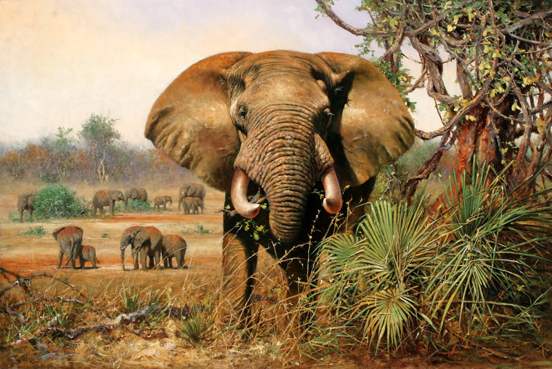 Elephant printing on canvas beautiful animal picture reproduction deorative painting for office /gift for clients(China (Mainland))