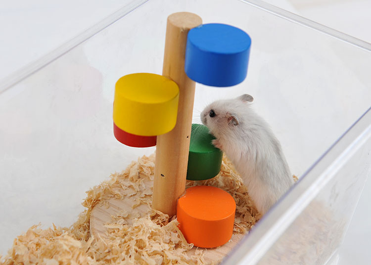 Hamster and Bird Cage Accessories Climbing Ladder Small Pet Rat Toys Supplies Gerbil Mice Chinchilla toys a15(China (Mainland))