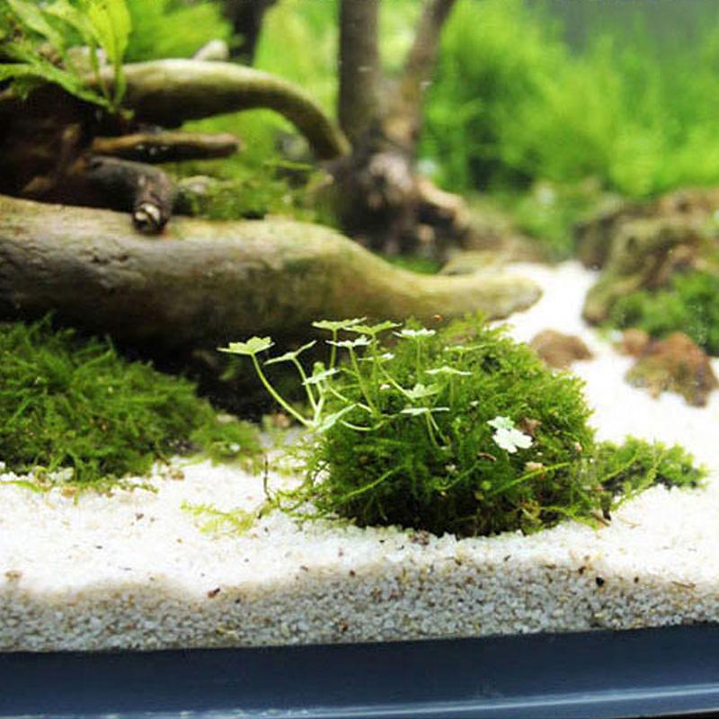 Выращивание мхов аквариумных 23