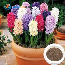 50 Pcs / Bag, Hyacinthus  Seeds, Diy Potted Plants, Indoor / Outdoor Pot Seed Germination Rate Of 95% Mixed Colors(China (Mainland))