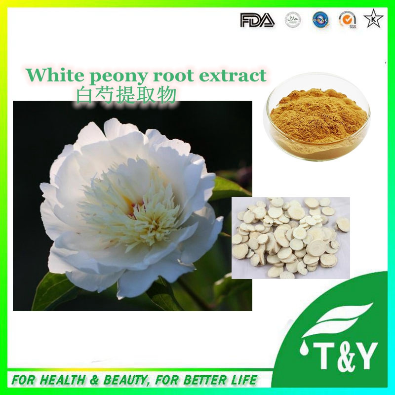 Pure paeonia lactiflora extract, natural white peony root extract,Paeonia Lactiflora Pall Extract 800g/lot