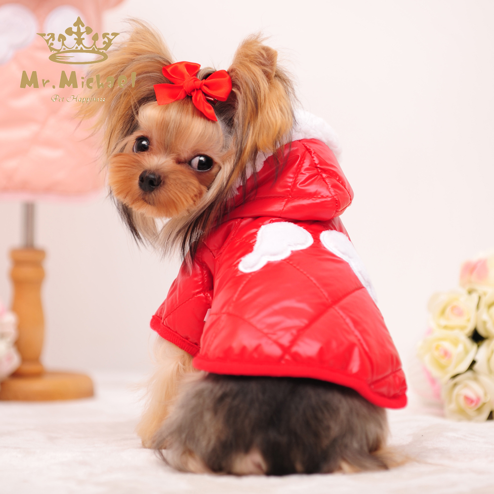 how to keep small dogs warm in winter