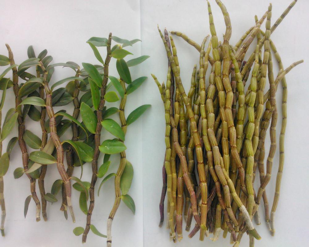 100g Dendrobium extract powder Boost metabolism blood pressure Lower blood sugar Enhance energy level(China (Mainland))