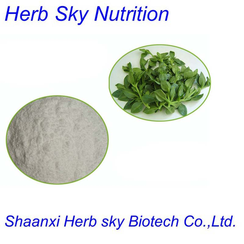 Organic Herba Andrographis P.E/herba andrographitis/Common Andrographis Herb Extract 400g/lot