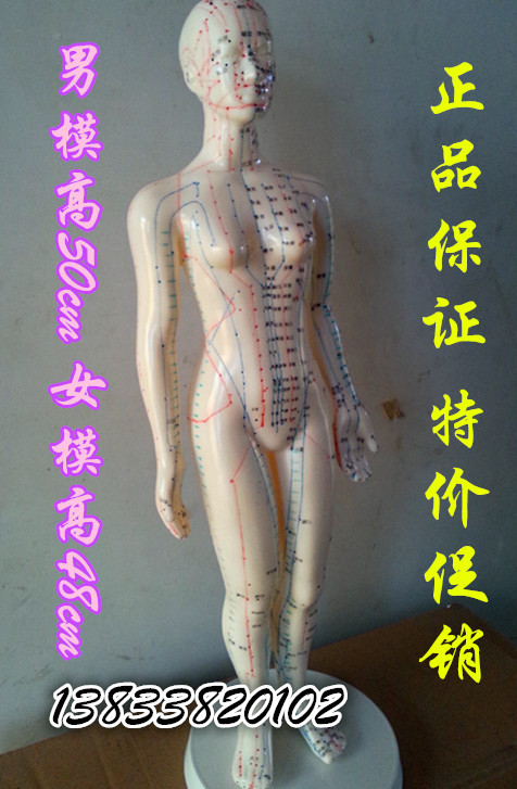 Genuine acupuncture mannequin mannequins model the human meridian points acupuncture medical body Female mold mold(China (Mainland))