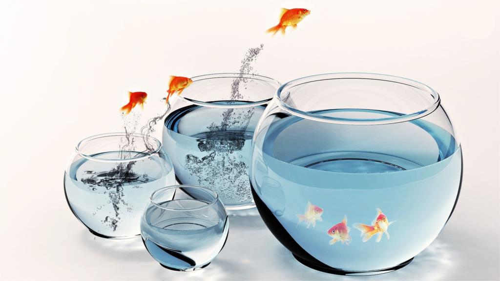 Animals Fishes and Aquariums 2 4' Size Home Decoration Canvas Poster Print(China (Mainland))