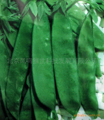 Peas France Hot nutrition vegetable seed pod 10seed(China (Mainland))