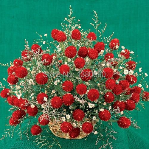 Acquista all 39 ingrosso online fragole colorate da grossisti for Fragole piante vendita