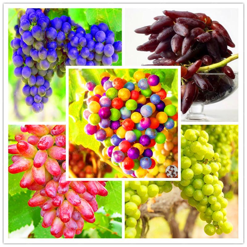 Устойчивый сорт растения