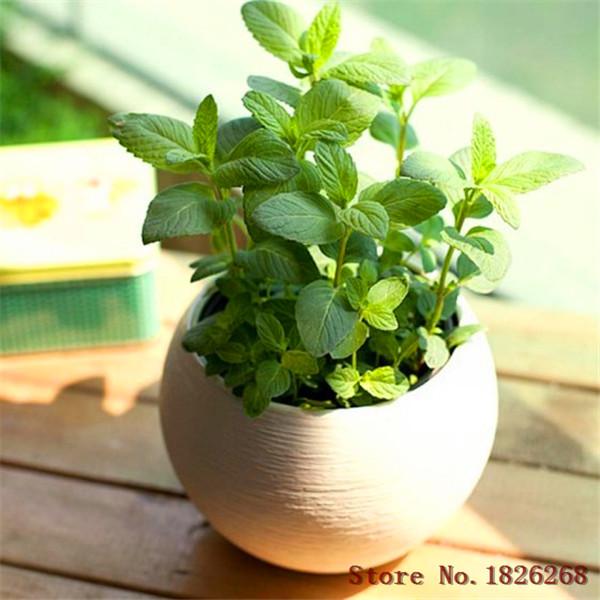 Achetez en gros graines de plantes m dicinales en ligne for Commande de plantes en ligne