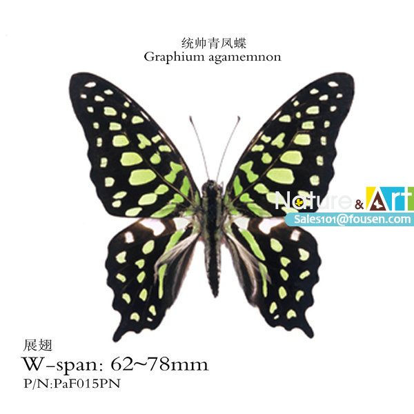 FOUSEN Nature&Art Graphium agamemnon Parantica sita triangle paper bag insect(China (Mainland))