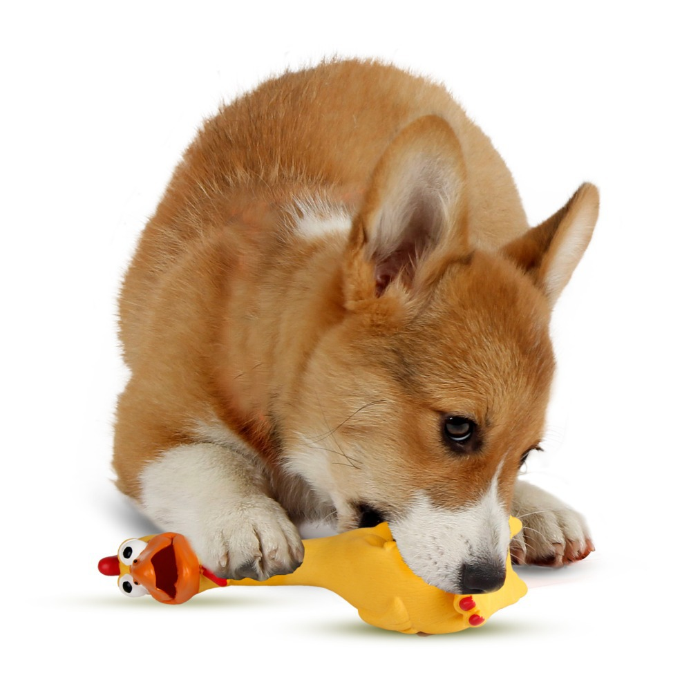 Toys For Dogs : Shrieking chicken pets toy for dogs puppy squeaky