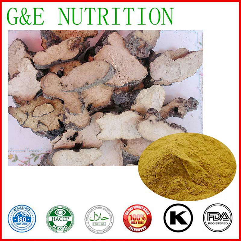 Chinese Herb nourishment Grifola frondosa extract, Prevent cancer Grifola frondosa P.E. 1000g