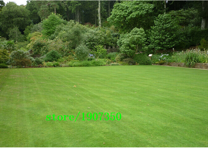 Lawn Seed 100pcs lawn Grass Seeds Fresh Green Soft Runner Natural Plant Free shipping(China (Mainland))