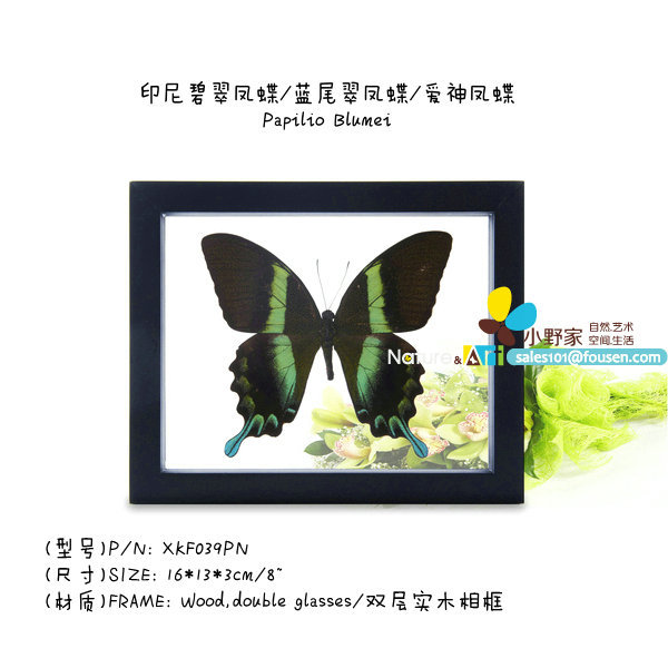 """FOUSEN Nature&Art 8"""" (double glasses) framed butterfly(China (Mainland))"""