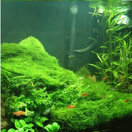 Online cheap hot selling aquarium grass seeds mix water for Easy aquatic plants