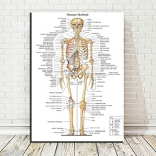 Compare Prices on Human Body Maps Online ShoppingBuy Low Price