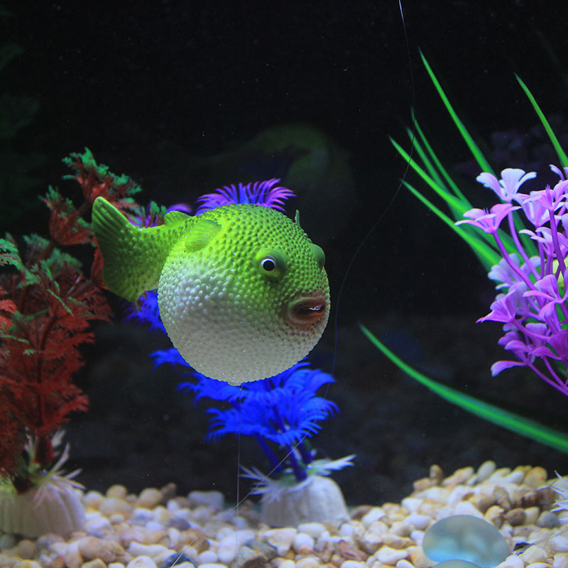 Popular puffer fish buy cheap puffer fish lots from china for Mini puffer fish
