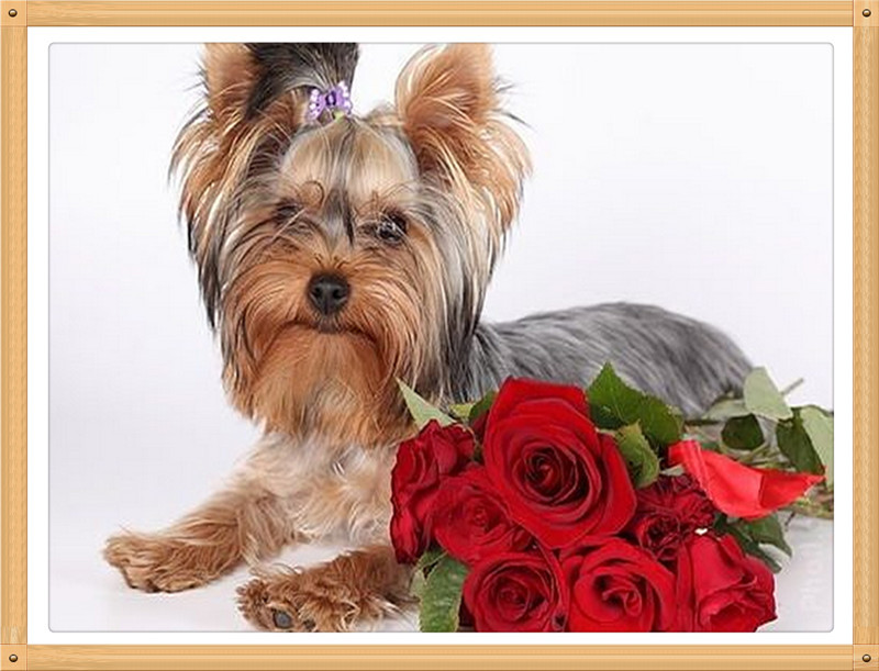 Longhaired Dog Red Rose 30x40cmDiamond embroidery Diy diamond square drill rhinestone pasted Crafts Needlework home decoration(China (Mainland))