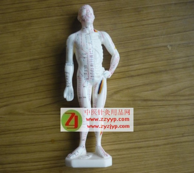 free shipping Acupuncture point model with English Acupuncture code for people learn acupuncture and moxibustion 26cm(China (Mainland))