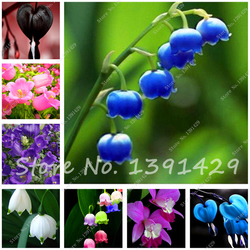 2 pcs Lily of the Valley Flower Bulbs , Bell Orchid Rhizome,Rich Aroma ,Bonsai Flower Bulbs, so cute and beautiful(China (Mainland))