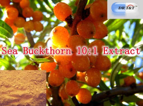 5 Pack High Quality Sea Buckthorn 10:1 Extract 500mg x 500caps free shipping