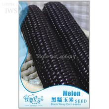Buy Sweet Corn Seeds Black Waxy Corn Seeds, Original Pack, 12 seeds, rich nutrient taste organic vegetables IWSB008 for $1.00 in AliExpress store