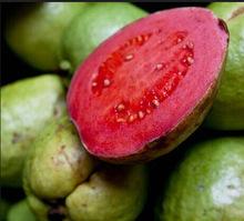 Home garden plant seed fresh guava Psidium Guajava Thailand pink large fresh fruit free shipping ,20seeds/bag(China (Mainland))