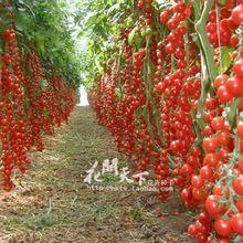 Hot Sale Time-limited Regular Novel Plant Pots Planters Plants New!!! 100 seeds/pack(China (Mainland))