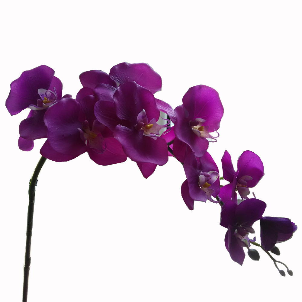 knumathise purple orchids images, Beautiful flower