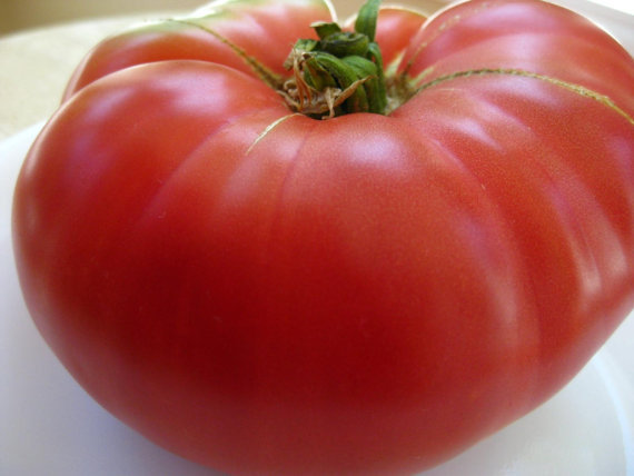 Гаджет  200/bag giant tomato seed Mortgage Lifter Tomato Seeds- Heirloom vegetable seeds for home garden spring plant None Дом и Сад