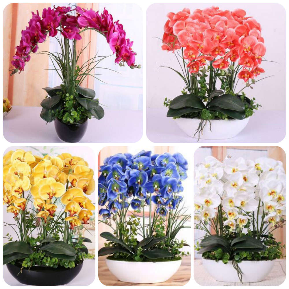orchid seeds High simulation flower phalaenopsis orchid plants Phalaenopsis Orchids Seeds -100 PCS(China (Mainland))