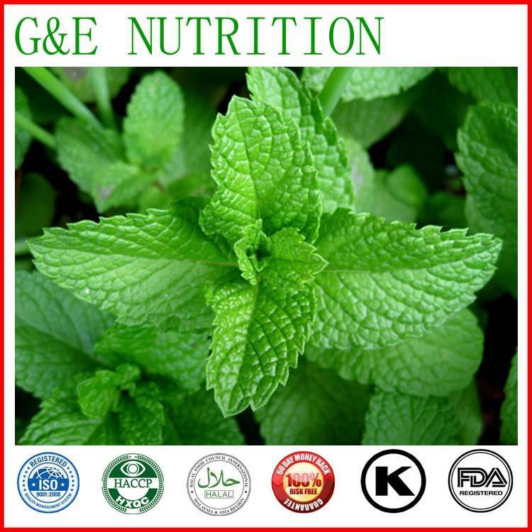 GMP standard corn mint extract,Best price corn mint extract powder