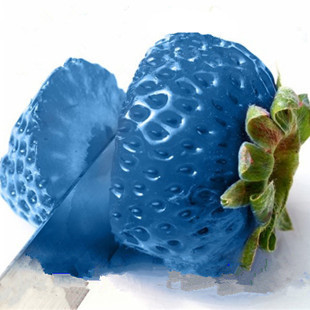Vegetables and fruit seeds blue Strawberry Seeds Bonsai plants Seeds for home & garden 500 seeds/bag free shipping(China (Mainland))