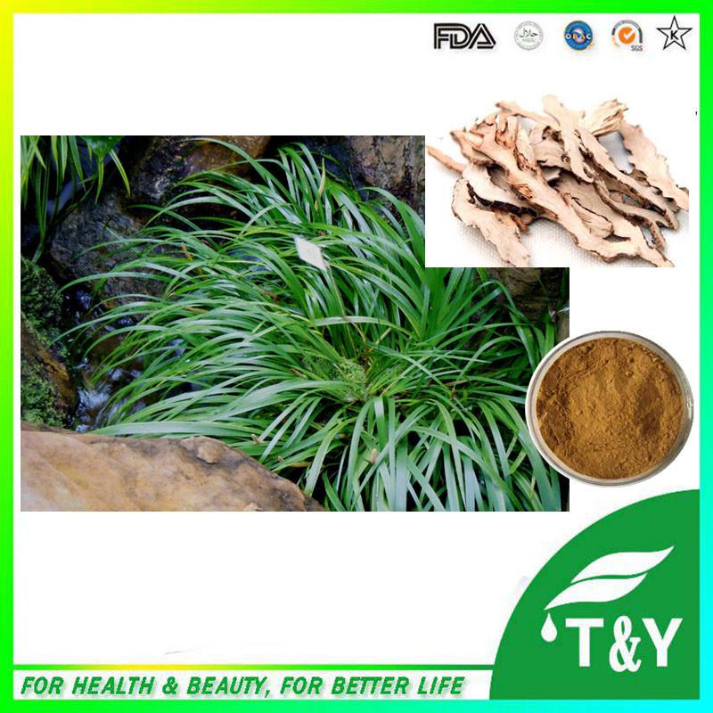 Natural Herb Acorus Tatarinowii Extract, Acorus Gramineus Extract Powder 700g/lot