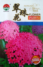 Buy Flower seed Cui bead flower seeds Flower flower bed Potted balcony mixed color 50 / package for $1.39 in AliExpress store