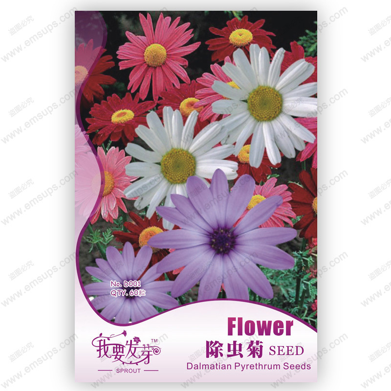 pyrethrum seeds multicolor chrysanthemum seeds pyrethrum cinerariifolium seed mosquito repelling plants - 60 pcs(China (Mainland))