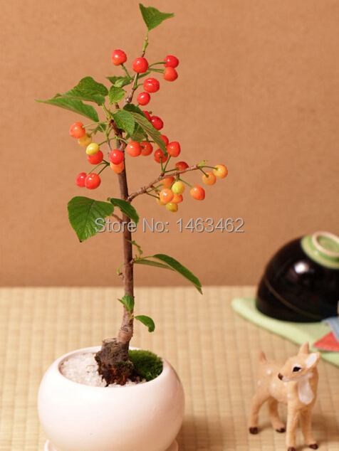 Indoor Plants Fruit Potted, mini Bonsai Tree Seeds Cherry 20 particles - Love life family store