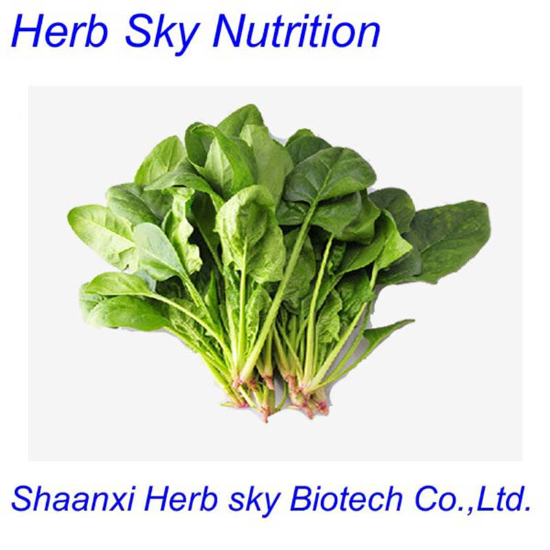 ISO&amp;GMP manufacturer supply Spinach extract powder 500g/lot<br><br>Aliexpress