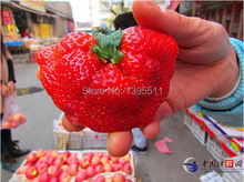 300  sexy  strawberry  seeds  send 200chili as gift  bonsai  strawberry seeds edible  four seasons large type