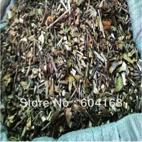Common Gendarussa Herb / small split bone / xiao bo gu /Dry Herbs Traditional Chinese medicine green tea 500 G Free Shipping(China (Mainland))