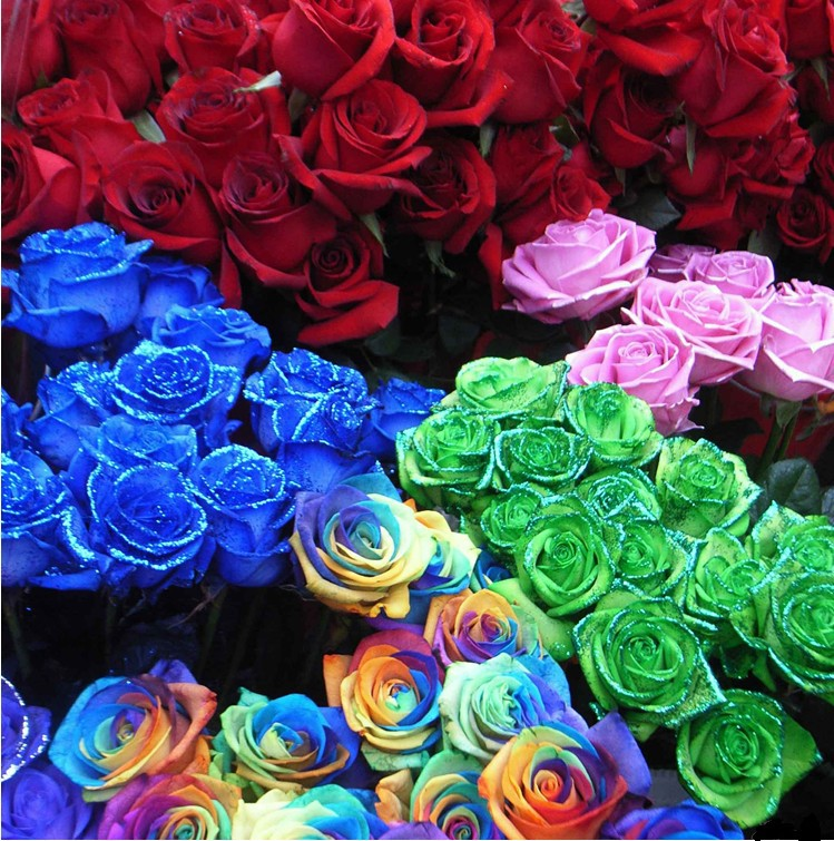 Buy chinese romantic rose seeds rainbow for Buy black and blue roses