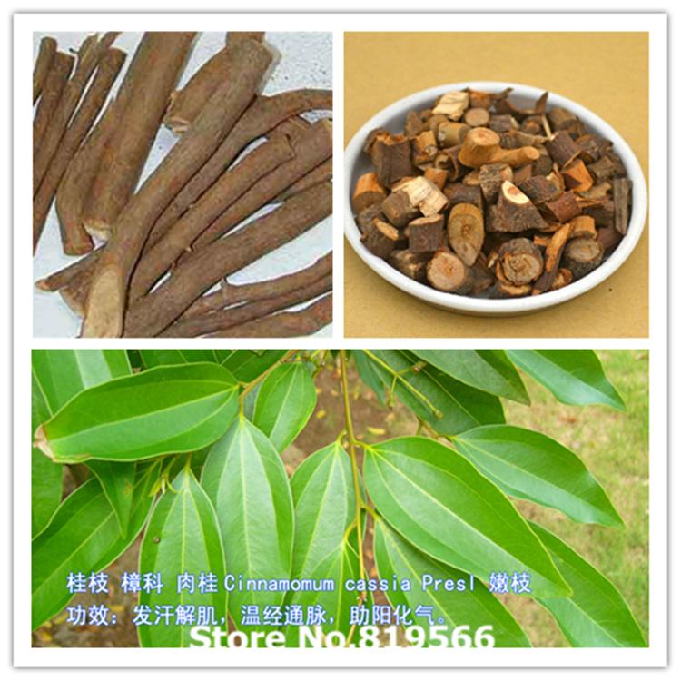 Dried Cinnamomum cassia Presl Herbal Tea 100g Organic guizhi Chinese Cassia twig Health Care Selfheal herbs gui zhi(China (Mainland))