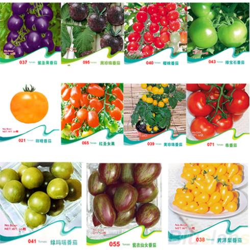 TOMATO SEEDS Purple Cherokee Cherry Black Red Yellow Blue Zebra Tomato Fruit Vegetable Bonsai Food 1DN8(China (Mainland))