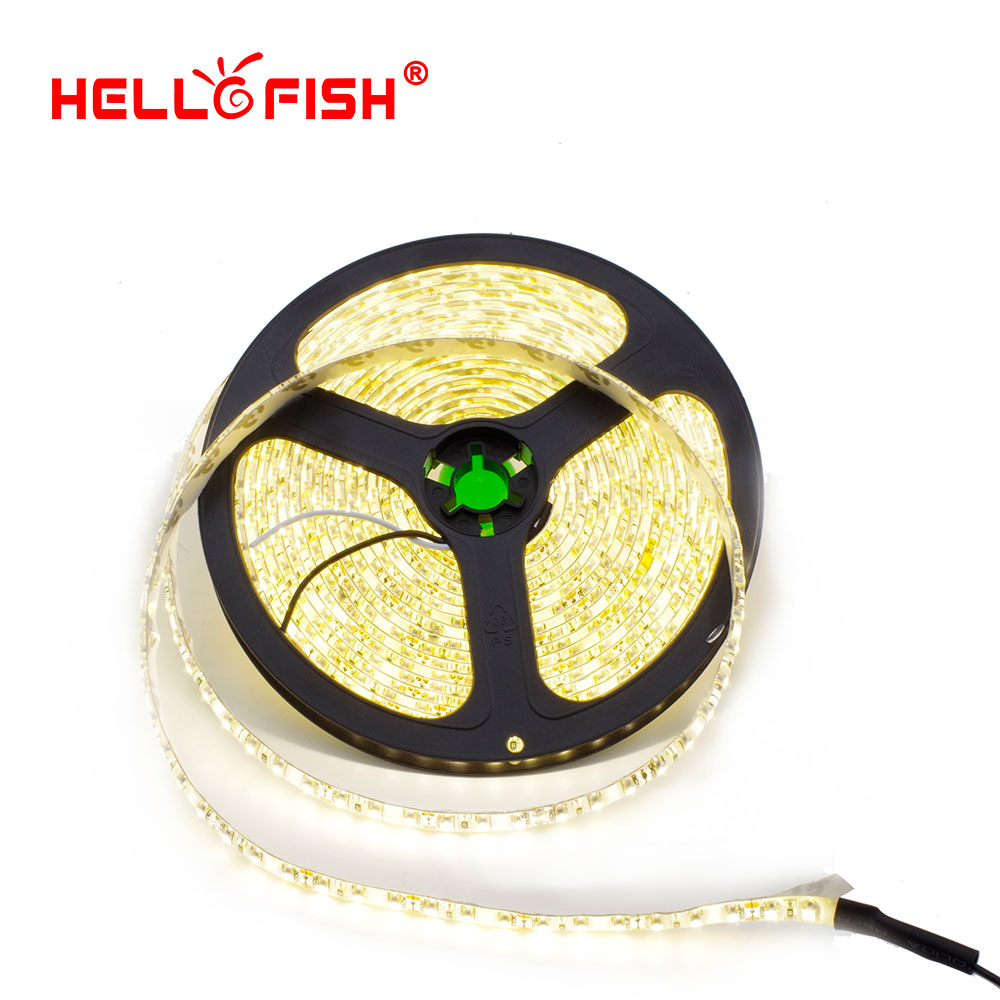 Hello Fish 5m IP65 Waterproof 600 LED Tape 2835 SMD 12V Flexible LED Strip Light, White/Warm White/Blue/Green/Red(China (Mainland))