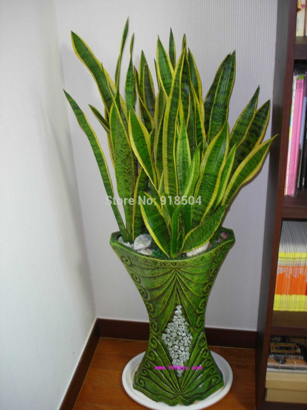 Plante d int rieur tombante for Plante interieur