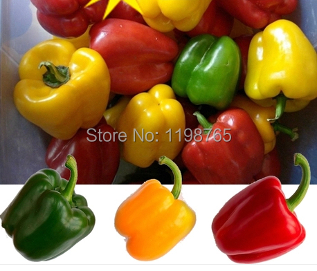 50pcs 6 Color mixed Yellow Puple Red Green Blue White Mix Sweet Bell Hot Pepper Seeds