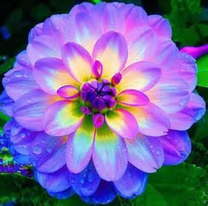 dahlia,dahlia flower Mixed Colors Dahlias Seeds For DIY Home Garden free shipping 10 seeds /bag(China (Mainland))