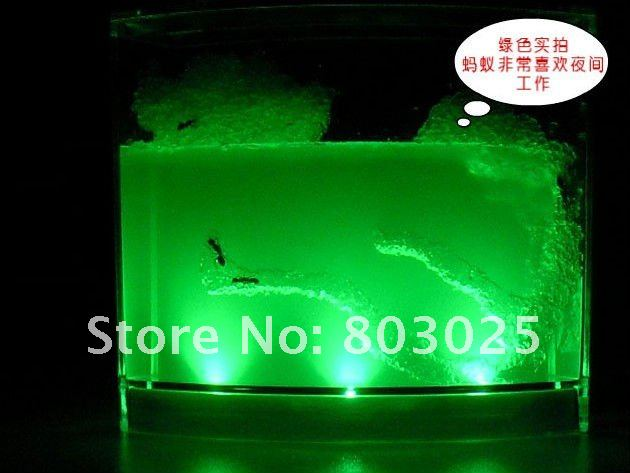 Ant Farm New Model With Backlights Novel Ecological Toys,Ants Home, Antworks Ant Farm Science Toys,Educational Toys<br><br>Aliexpress