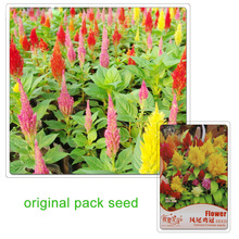 Buy 60 Seeds / Pack,Pteris Cockscomb Seed,Balcony Potted Flowers Seed Celosia Cristata Seeds for $1.45 in AliExpress store